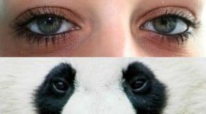 cara menghilangkan mata panda 2