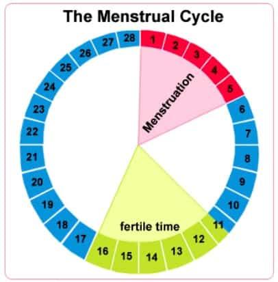kapan sel telur keluar kapan sel telur keluar dari ovarium kapan sel telur keluar setelah mens kapan sel telur keluar setelah haid waktu sel telur keluar kapan sel telur wanita keluar kapan waktu sel telur keluar kapan sel telur itu keluar kapan sel telur akan keluar pada saat kapan sel telur keluar