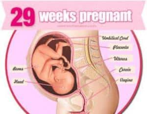 hamil 29 minggu