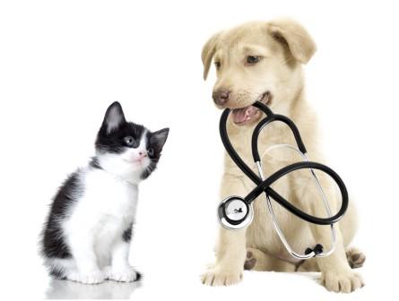 Pet health insurance reviews Pet health insurance reviews Pet health insurance reviews