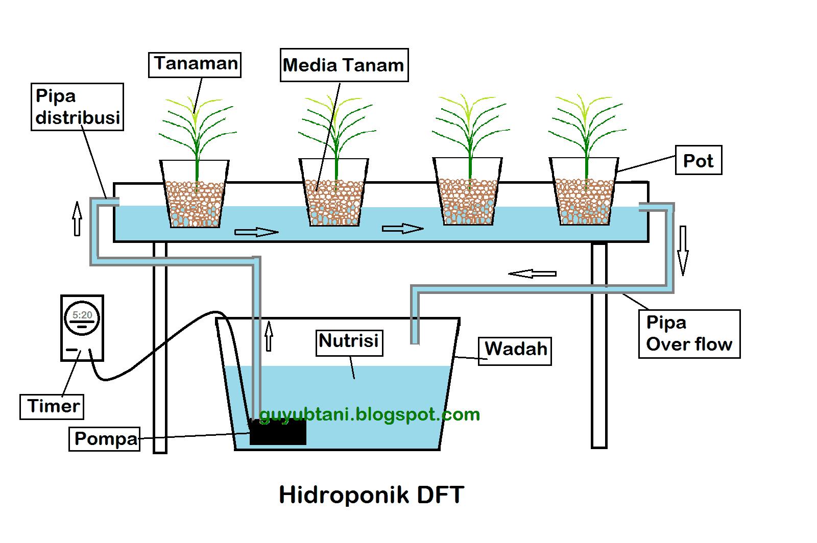 cara menanam hidroponik DFT 2