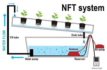 cara menanam hidroponik NFT