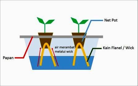 cara menanam hidroponik dengan sistem wick