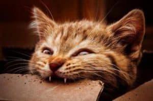 Arti Mimpi Digigit Kucing Arti Mimpi Digigit Kucing