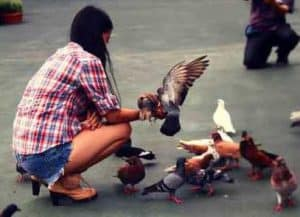 Arti Mimpi Menangkap Burung Arti Mimpi Menangkap Burung