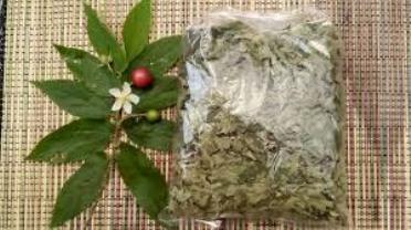 efek samping daun kersen efek samping daun kersen
