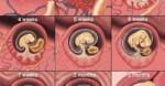 Cara Menghitung Usia Kehamilan yang Akurat Berdasarkan HPHT