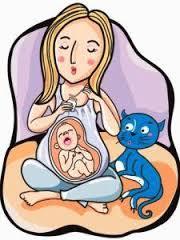 Bahaya Kucing Untuk Ibu Hamil