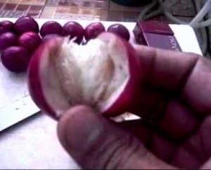manfaat buah mahkota dewa