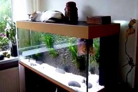 Hiasan Dalaman Rumah Terbaru aquarium ikan hias