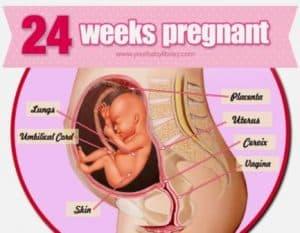 hamil 24 minggu