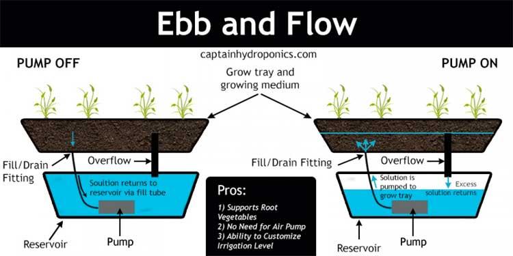 tanaman hidroponik ebb flow system