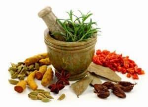Obat herbal asam urat dan kolesterol Obat herbal asam urat dan kolesterol