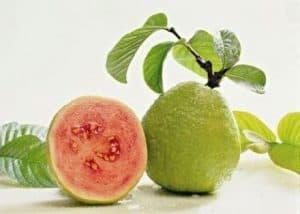 obat ambeien alami yang ampuh buah jambu