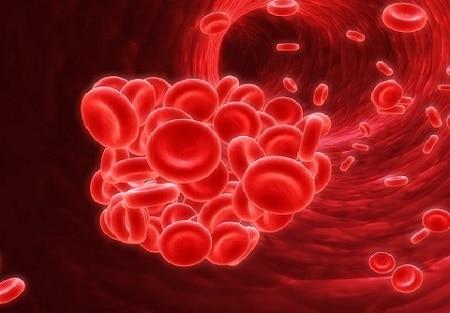 makanan penambah hb darah