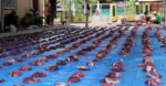 Pembagian Daging Kurban dan Tata Cara yang Benar Menurut Islam