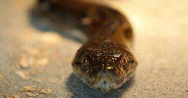 mimpi dikejar ular, mimpi dikejar ular kobra, mimpi dikejar ular hitam, mimpi dikejar ular putih, mimpi dikejar ular hijau, mimpi dikejar ular banyak, mimpi dikejar ular piton, mimpi dikejar ular saat hamil, mimpi dikejar ular menurut Islam, mimpi dililit ular