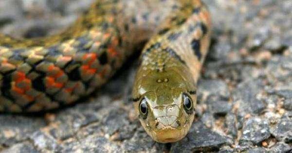 mimpi melihat ular, mimpi melihat ular banyak, mimpi melihat ular di sungai, mimpi melihat ular besar di jalan, mimpi melihat ular kecil, mimpi melihat ular besar di pohon, mimpi melihat ular hijau ular kobra