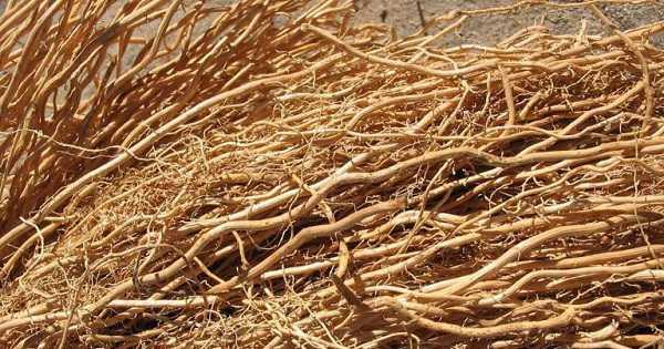 4. Pewangi pakaian alami dari akar wangi