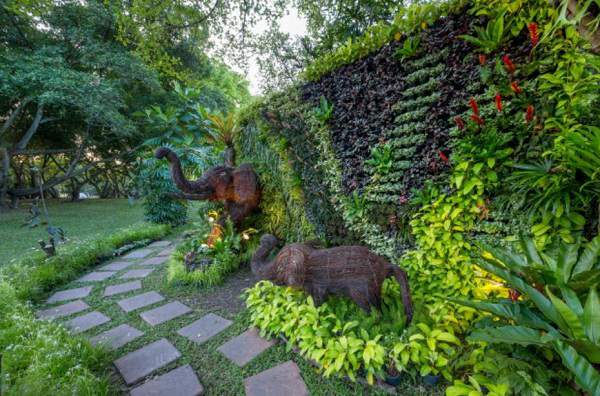 jenis tanaman untuk taman depan rumah Jasa Taman Jogja
