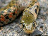 mimpi melihat ular