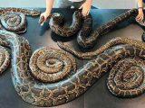 mimpi membunuh ular